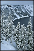 Trees and Lake rim in winter. Crater Lake National Park, Oregon, USA.