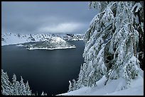 Trees and Wizard Island in winter with clouds and dark waters. Crater Lake National Park ( color)