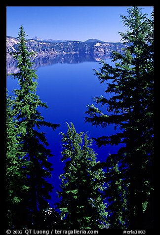 Trees and Lake. Crater Lake National Park (color)