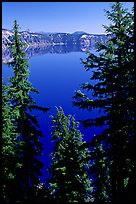 Trees and Lake. Crater Lake National Park, Oregon, USA. (color)