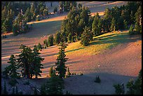 Volcanic hills and pine trees. Crater Lake National Park ( color)