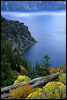 Sagebrush on Lake rim. Crater Lake National Park, Oregon, USA.