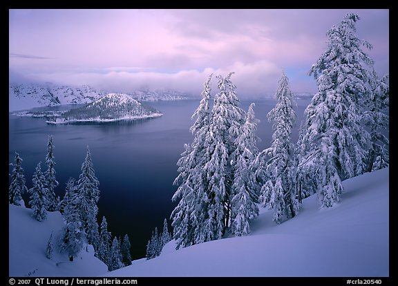 Trees, Wizard Island, and lake, winter dusk. Crater Lake National Park (color)