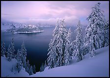 Trees, Wizard Island, and lake, winter dusk. Crater Lake National Park, Oregon, USA.