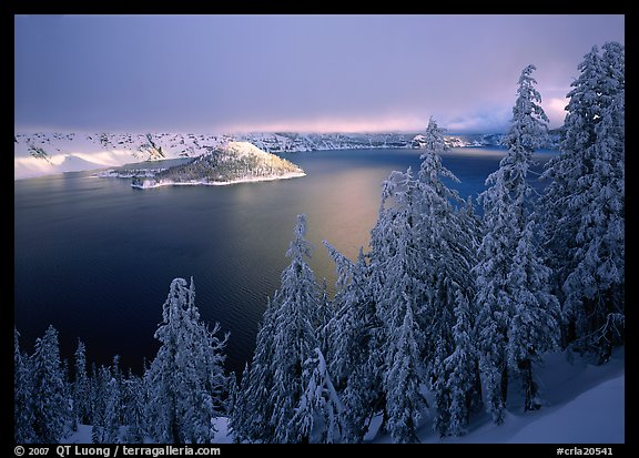 Conifers, Lake and Wizard Island, winter sunrise. Crater Lake National Park, Oregon, USA.