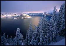 Conifers, Lake and Wizard Island, winter sunrise. Crater Lake National Park ( color)