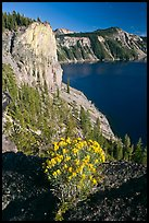 Sage flower and cliff. Crater Lake National Park, Oregon, USA.