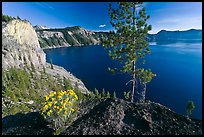 Flowers, cliff, and lake. Crater Lake National Park, Oregon, USA.