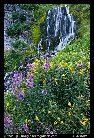 Vidae Falls and wildflowers. Crater Lake National Park (color)
