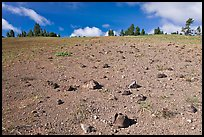 Pumice plain. Crater Lake National Park, Oregon, USA. (color)
