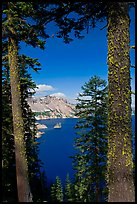 Lake seen between pine trees. Crater Lake National Park, Oregon, USA.