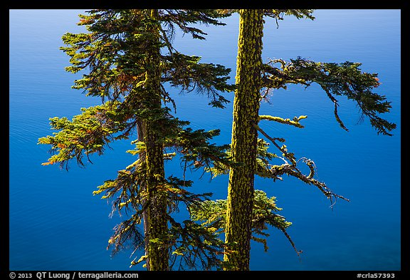 Two tree trunks with lichen profiled agains blue waters, Wizard Island. Crater Lake National Park (color)