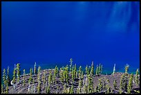 Hemlock trees on lava rocks bordering blue waters of Skell Channel, Wizard Island. Crater Lake National Park ( color)
