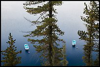 Tour boats seen between trees, Cleetwood Cove. Crater Lake National Park ( color)