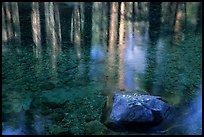 Reflections in Cedar Grove. Kings Canyon National Park ( color)