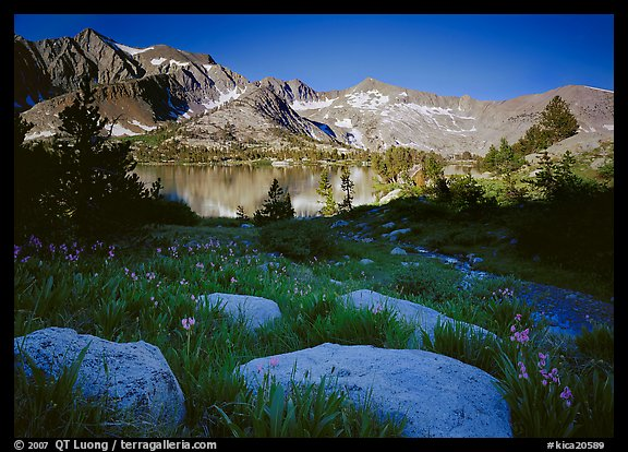 Woods lake and wildflowers, morning. Kings Canyon  National Park (color)