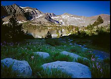 Woods lake and wildflowers, morning. Kings Canyon National Park ( color)