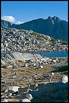 Deer in alpine terrain, Dusy Basin, afternoon. Kings Canyon National Park ( color)