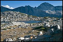 Deer, boulders, alpine lake, and mountains, Dusy Basin. Kings Canyon National Park, California, USA.