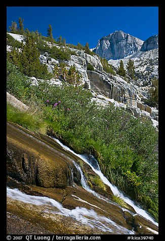 Waterfall, wildflowers and mountains, Le Conte Canyon. Kings Canyon National Park (color)