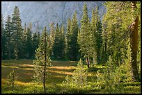 Big Pete Meadow, late afternoon, Le Conte Canyon. Kings Canyon National Park, California, USA.