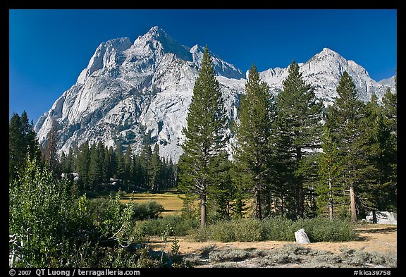 Langille Peak and pine trees, Big Pete Meadow, Le Conte Canyon. Kings Canyon National Park (color)