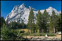 Langille Peak and pine trees, Big Pete Meadow, Le Conte Canyon. Kings Canyon National Park ( color)
