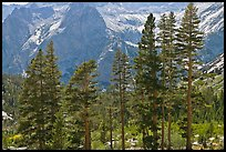 Pine trees and granite peaks. Kings Canyon National Park, California, USA.