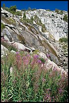 Fireweed and waterfall. Kings Canyon National Park ( color)