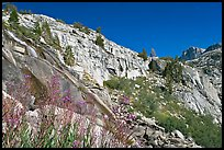 Fireweed and cliffs with waterfall. Kings Canyon National Park, California, USA.