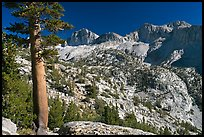 Pine tree and Mt Giraud chain, Lower Dusy basin. Kings Canyon National Park, California, USA.