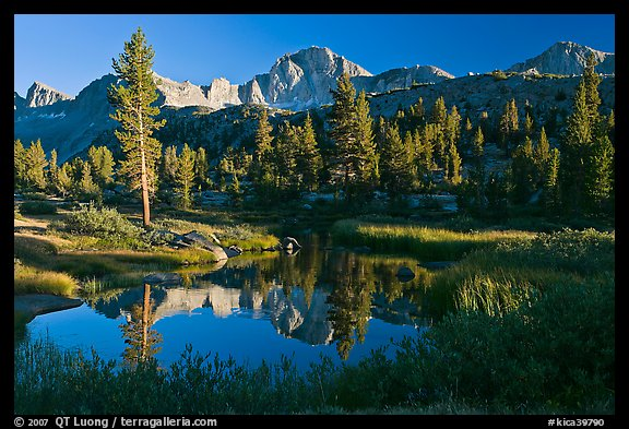Trees, grasses, calm reflections, Lower Dusy basin. Kings Canyon National Park, California, USA.