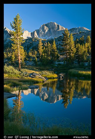 Trees and mountains reflected in calm creek, Lower Dusy basin. Kings Canyon National Park (color)