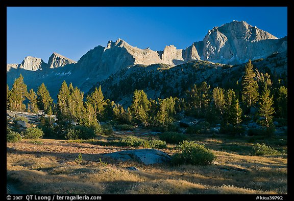 Meadow, trees and mountains, late afternoon, Lower Dusy basin. Kings Canyon National Park (color)