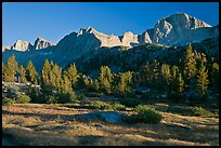 Meadow, trees and mountains, late afternoon, Lower Dusy basin. Kings Canyon National Park, California, USA.