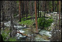 Streams in forest in the spring, Cedar Grove. Kings Canyon National Park, California, USA. (color)