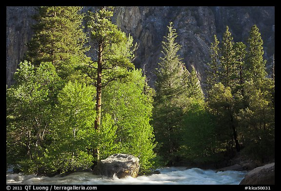 Stream and pine trees in spring. Kings Canyon National Park (color)