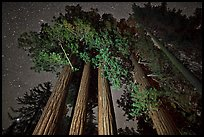 Giant sequoia grove and starry sky. Kings Canyon National Park, California, USA.