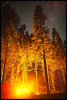 Fire amongst the sequoias, and starry sky. Kings Canyon National Park, California, USA.