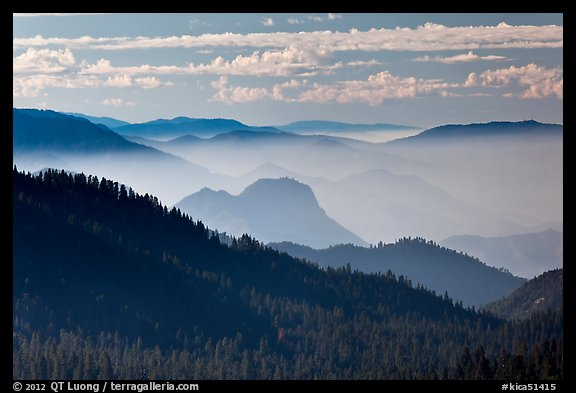 Distant sequoia forest and ridges. Kings Canyon National Park (color)