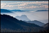 Distant sequoia forest and ridges. Kings Canyon National Park ( color)