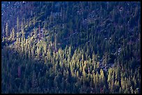 Forest on Cedar Grove valley walls. Kings Canyon National Park, California, USA. (color)