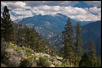 Peaks and trees from Cedar Grove rim. Kings Canyon National Park, California, USA. (color)
