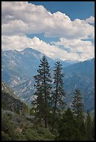 Trees and hazy valley. Kings Canyon National Park, California, USA.