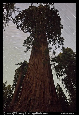Sequoia and star trails, Grant Grove. Kings Canyon National Park (color)