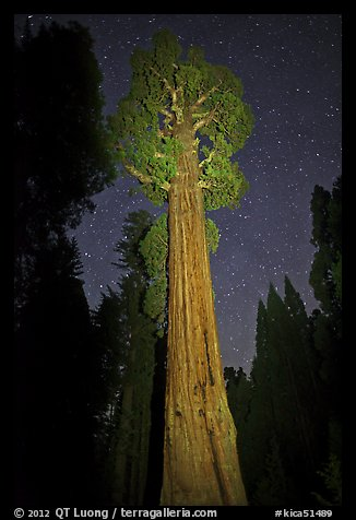 General Grant tree and night sky. Kings Canyon National Park (color)