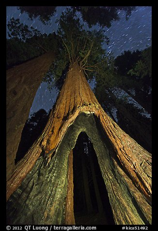 Sequoia tree with opening at base at night, Redwood Canyon. Kings Canyon National Park (color)