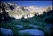 Woods lake and wildflowers, morning. Kings Canyon  National Park, California, USA.