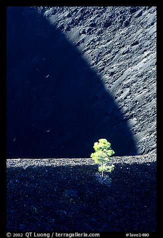 Shadows and pine on top of Cinder cone, early morning. Lassen Volcanic National Park, California, USA.