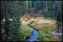 Kings Creek, meadow and forest. Lassen Volcanic National Park ( color)